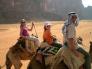 Sim Ella Edie camels